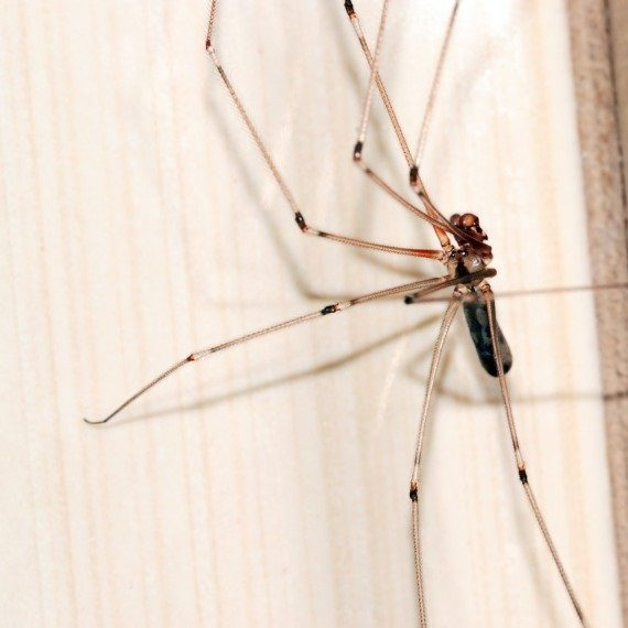 Spiders, Pest Control in Wimbledon, SW19. Call Now! 020 8166 9746